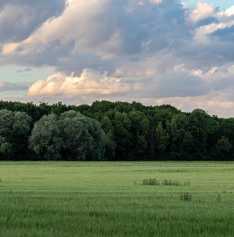 landschap tijdens zonsondergang met wolken, gras en bos bomen