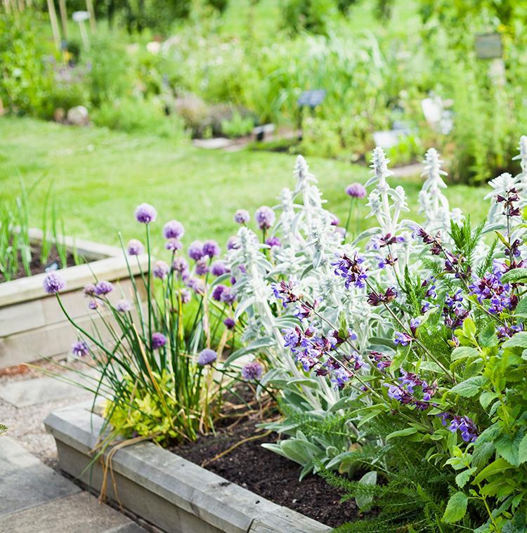 plantation d'herbes aromatiques avec du romarin, de la ciboulette, de la menthe et d'autres herbes
