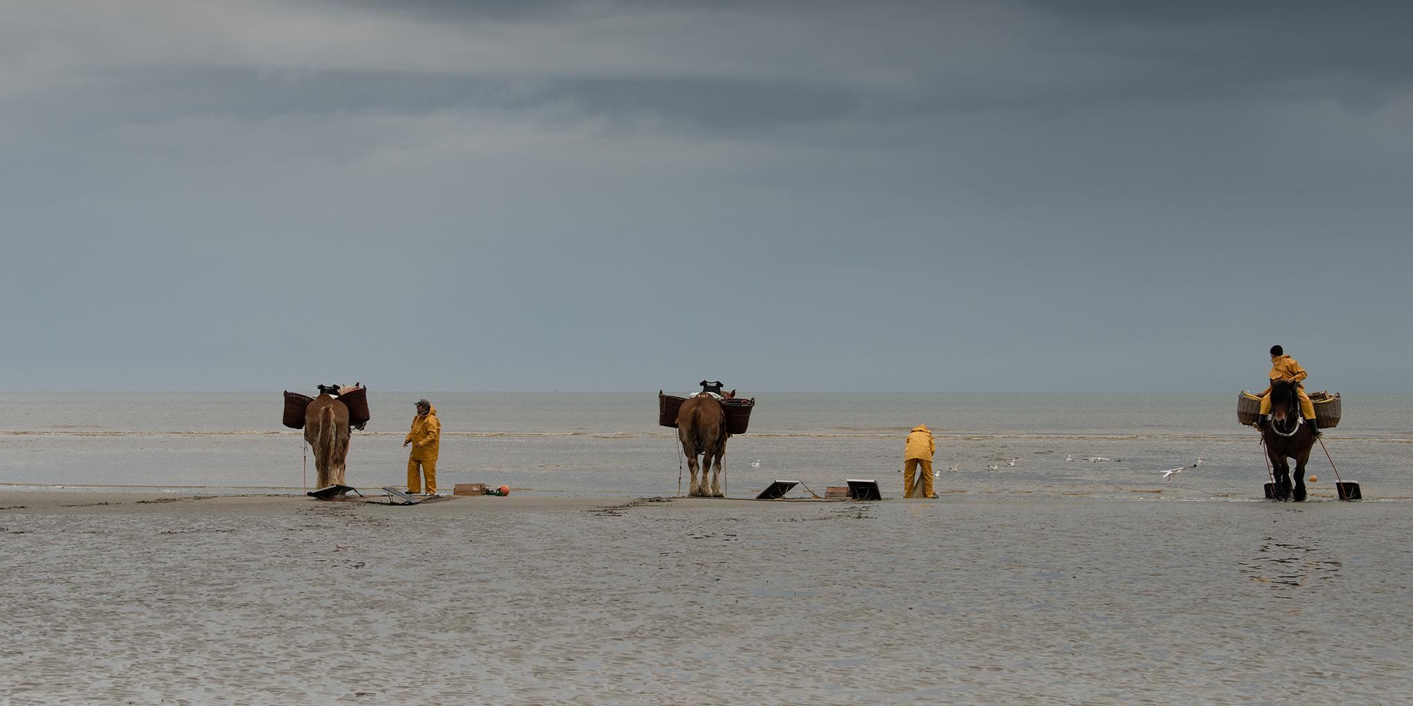 De Noordzee en de paardenvissers: twee van de grootste lokale producenten van sterrenchef Willem Hiele.