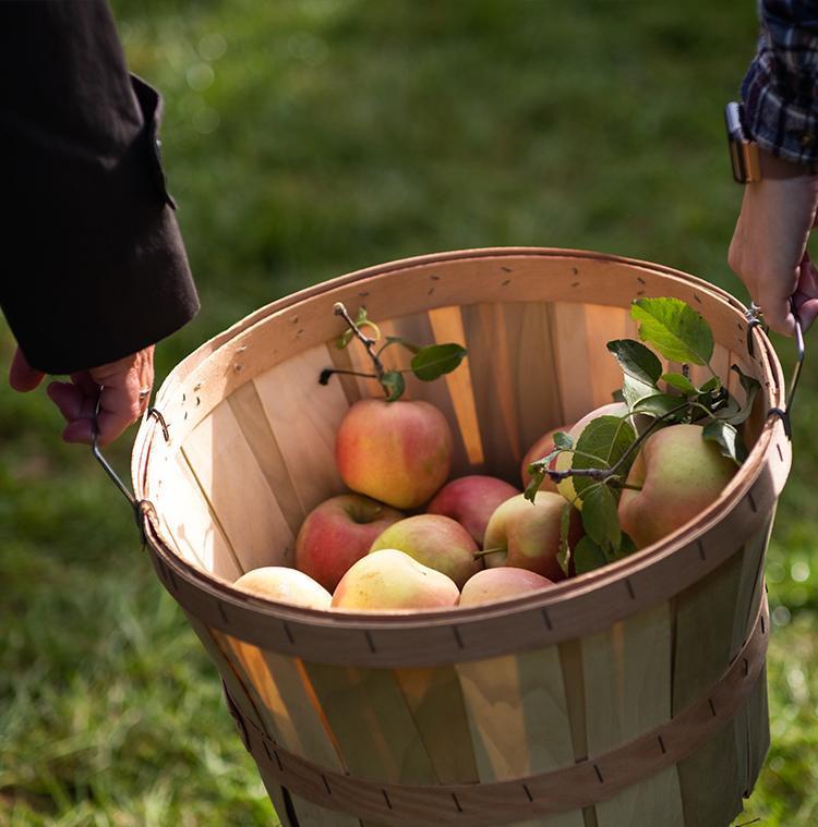 mand met appels op lokale boerderij