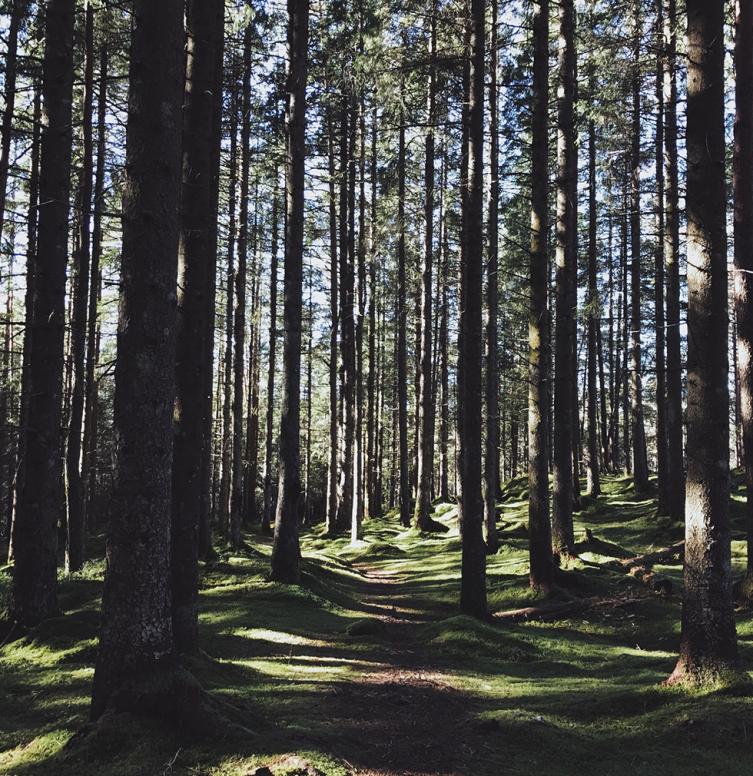 natuurbeeld van een bos